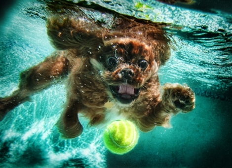 underwater-doggies-02