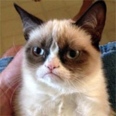 I AM GRUMPY CAT.